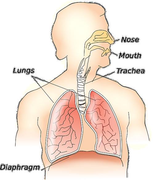 anatomy-117148_640