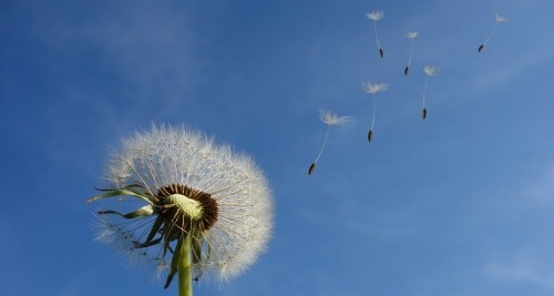 Mindfulness The power of Letting Go